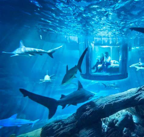 d 233 couvrez les aquariums de