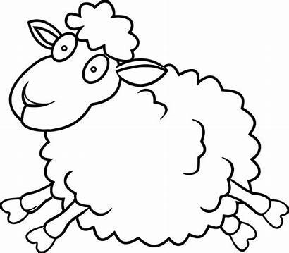 Sheep Coloring Domba Gambar Mewarnai Anak Colouring