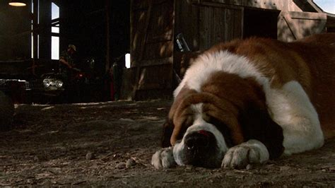 scariest dogs  movies  tv