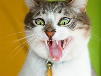 Ugly Faces Cats Funny Cat Wallpapers Desktop