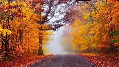 Autumn Forest Fog Desktop Road Widescreen Wallpapers