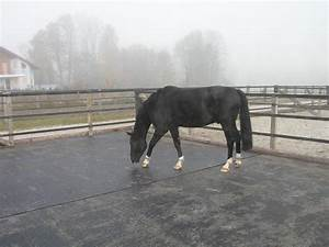 tapis caoutchouc belmondo pour paddock abris ext rieur With tapis caoutchouc chevaux
