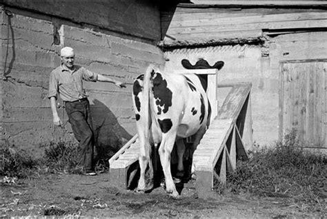 great depression dairy scenes