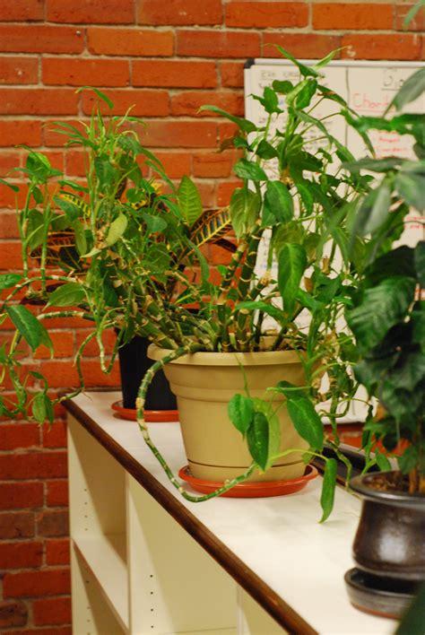 best office desk plants best office plants good plants for the office environment
