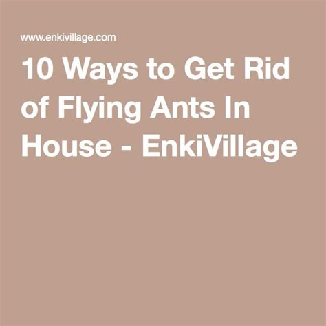 get rid of ants in house 25 best ideas about flying ants in house on pinterest small flies in house flying ants and
