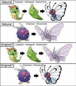 Pokémon Evolution Theories | Fan Theories Wiki | FANDOM ...