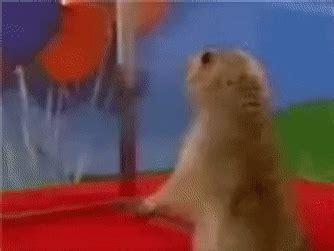 hamster gifs find  top gif  gfycat