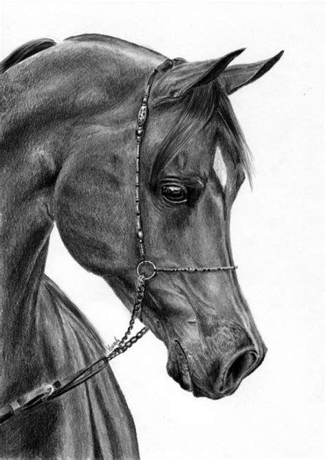 foto de Koń arabski rysunek ołówek Konie Rysunki zwierząt Rysunki