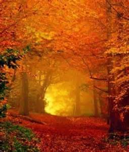 Fall Autumn Tree Tunnel