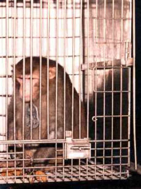 monkeys   primates cage  animal exploitation