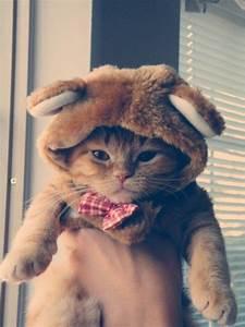 nounours chat chat déguisé sur chat mignon