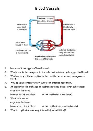 blood vessels  teachbiology teaching resources tes