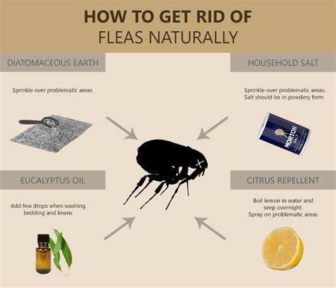 salt for fleas on hardwood floors salt for fleas in carpet carpet review