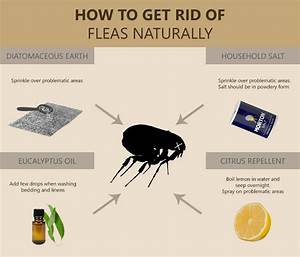 Will steam cleaning my carpets get rid of fleas floor for How to kill fleas on wood floors
