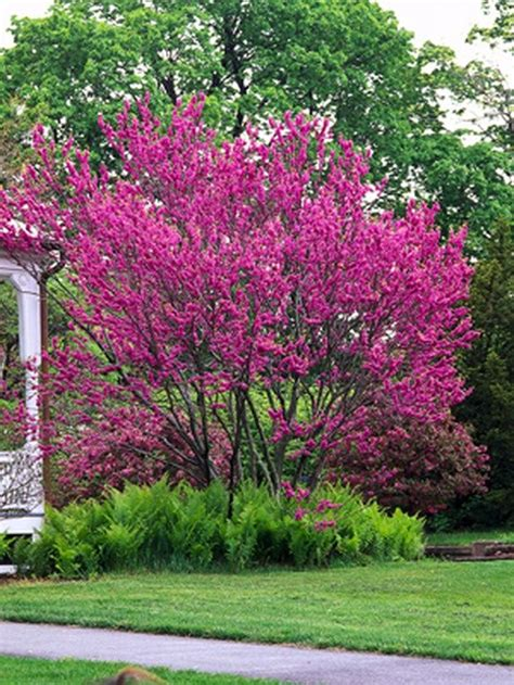 small trees for small spaces 1000 images about trees for landscaping on pinterest shade trees red maple tree and fast