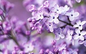 Pretty Purple Flowers Quotes. QuotesGram