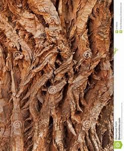 Achat Tronc Arbre Decoratif : texture approximative de tronc d 39 arbre photo libre de ~ Zukunftsfamilie.com Idées de Décoration