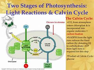 Ap Biology Ch 8 Photosynthesis Light Reactions