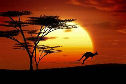 Sunset Australia Kangaroo Custom Adobestock