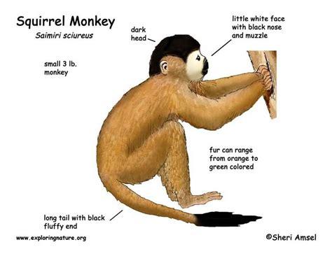 monkey body parts bing images