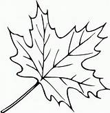 Leaf Coloring Template Printable Pages Autumn Comments sketch template
