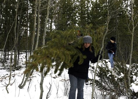 utah christmas tree permits time to get a permit for cutting a tree in a utah national forest the salt lake tribune