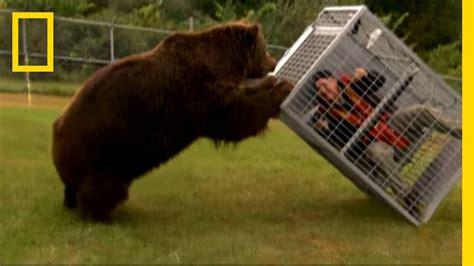 brown bear attack dangerous encounters alaskas bear
