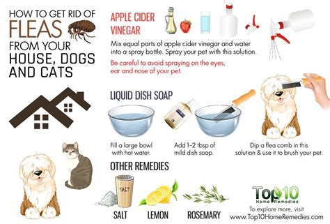 rid  fleas   house dogs  cats