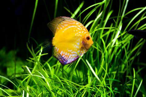 Wie Reinige Ich Mein Aquarium Richtig? » Tierheilkunde