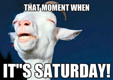 It S Saturday Meme - 10 funny saturday memes that capture real feelings of the weekend