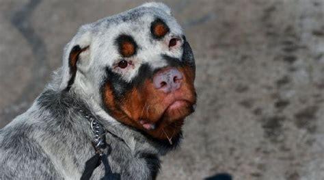 adorable dogs    rarest colored fur