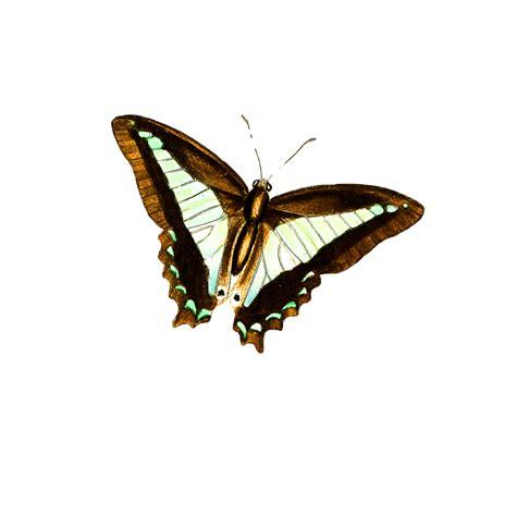 mariposas  colorear fotos de preciosas mariposas