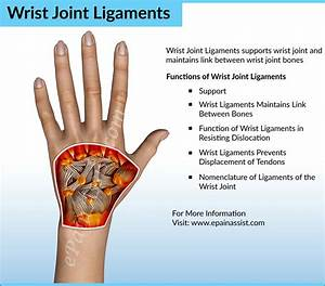 Wrist Joint Anatomy|Bones, Movements, Ligaments, Tendons ...
