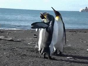 Penguins GIFs - Find & Share on GIPHY