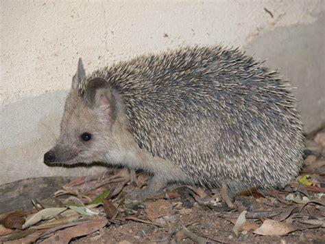 Tiere, Wildlife, Säugetiere Bilder Auf