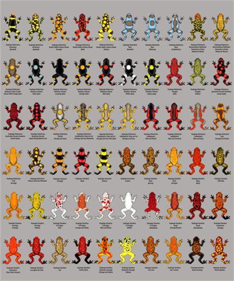 multitude  morphs harlequin dart frogs featured