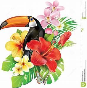 Картинки по запросу tropical plants and flowers | цветы ...