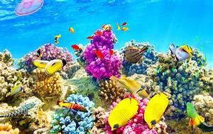 Fish  Fishes  Underwater  Ocean  Sea  Sealife  Nature
