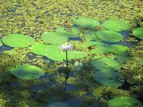 pond background pond backdrop images search
