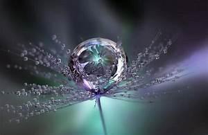 raindrops pictures | ... , Colours, Flower, Large ...