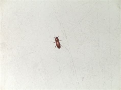 insecte salle de bain veglix les derni 232 res id 233 es de design et int 233 ressantes 224 appliquer