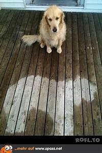 Regen Lustig sieht nach regen aus lustige bilder spr che