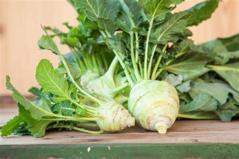cuisiner blettes feuilles guide des légumes de saison à cuisiner en décembre page 3