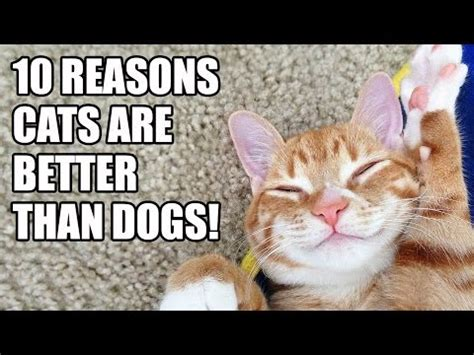 why are dogs better than cats why cats are better than dogs funnycat tv