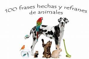 100 refranes y frases hechas de animales Centro Veterinario Bichos
