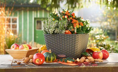 Herbstdeko Für Große Fenster by Herbstdekoration