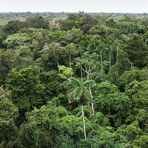 trees   amazon rainforest  pictures world