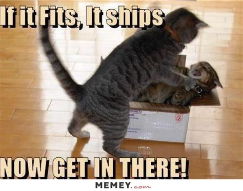 Cat Fight Meme - cat memes funny cat pictures memey com page 2