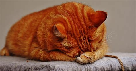can cats cry can cats cry tears cute cats