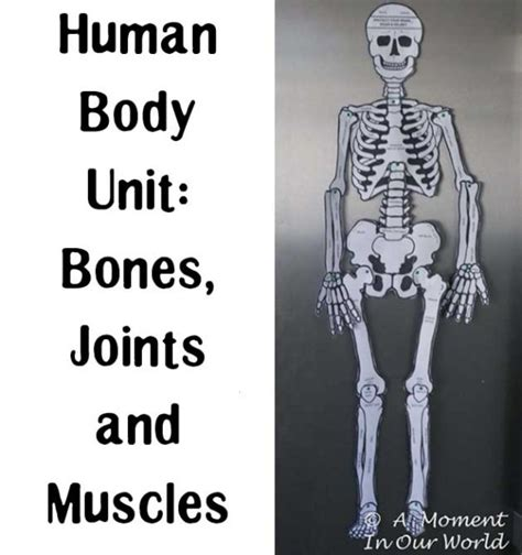 The purpose of this unit study on bones and muscles is to help students learn and understand the function and purpose of the bones and muscles in the body. Human Body: Bones, Joints and Muscles - A Moment in our World
